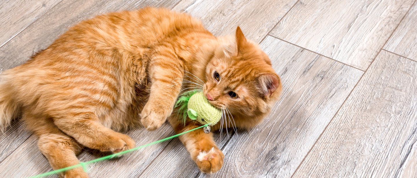 A cat playing with a knitted toy
